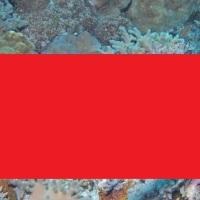 Φιστουλάρια: Δείτε το ψάρι της Ερυθράς θάλασσας που τρόμαξε την Αργολίδα! (photo)