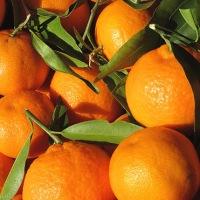 Μανταρίνι: Το μοναδικό φρούτο που αποβάλλει από τον οργανισμό τα βαρέα μέταλλα!