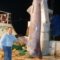 Η άγρια μάχη καρχαρία 5 μέτρων με την ανεμότρατα... (photos)