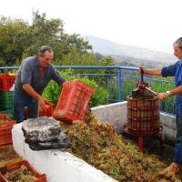 ΜΑΘΕΤΕ: Τα μυστικά για καλό κρασί και καλή τσικουδιά - τσίπουρο...