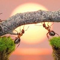 Ο ελέφαντας και τα μυρμήγκια (ΑΝΕΚΔΟΤΟ)